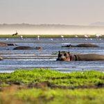Rondreis Zuid-Afrika isimangaliso nijlpaarden