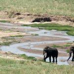 Rondreis Tanzania Tarangire
