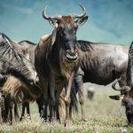 Rondreis Zanzibar Serengeti