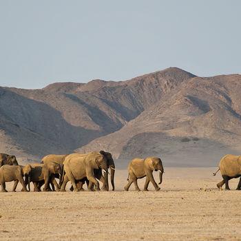 Rondreis Namibië: Damaraland