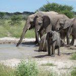 Rondreis Namibie, Etosha