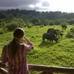 Romndreis Tanzania Rhino Lodge Ngorongoro Crater